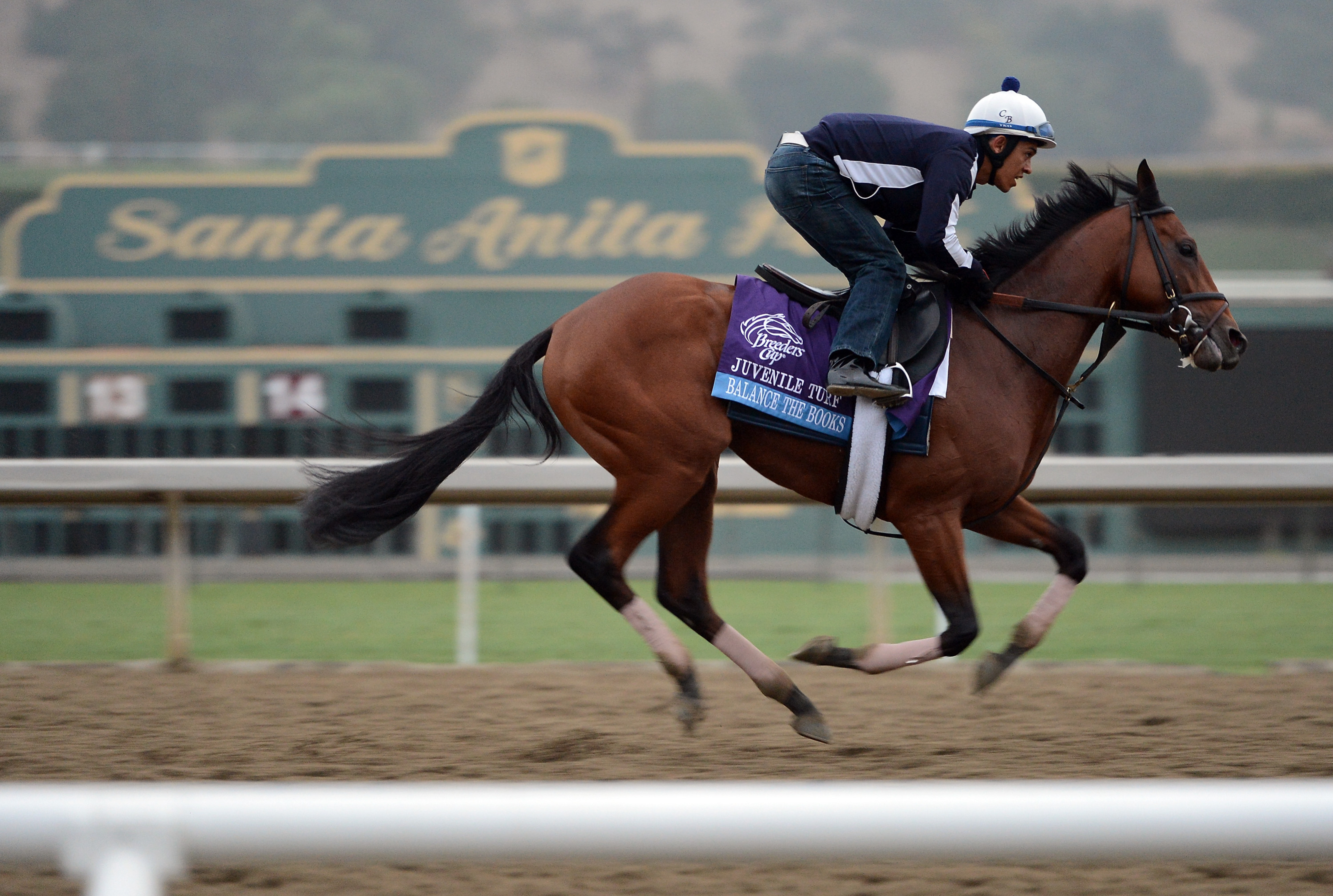 Balance the Books is part of a full field of 12 in Saturday's Spiral Stakes.