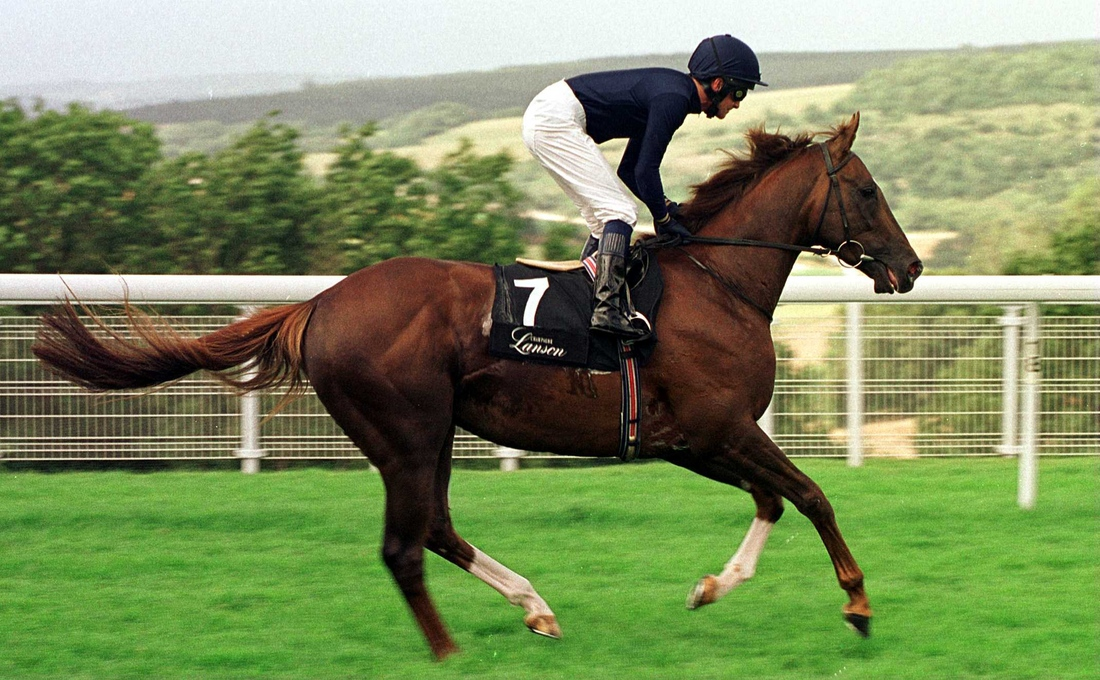 Giant's Causeway, just one of the many of Storm Cat's powerful offspring.