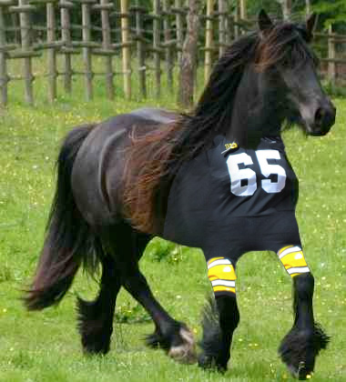 Reason #1: Horses look great in uniform