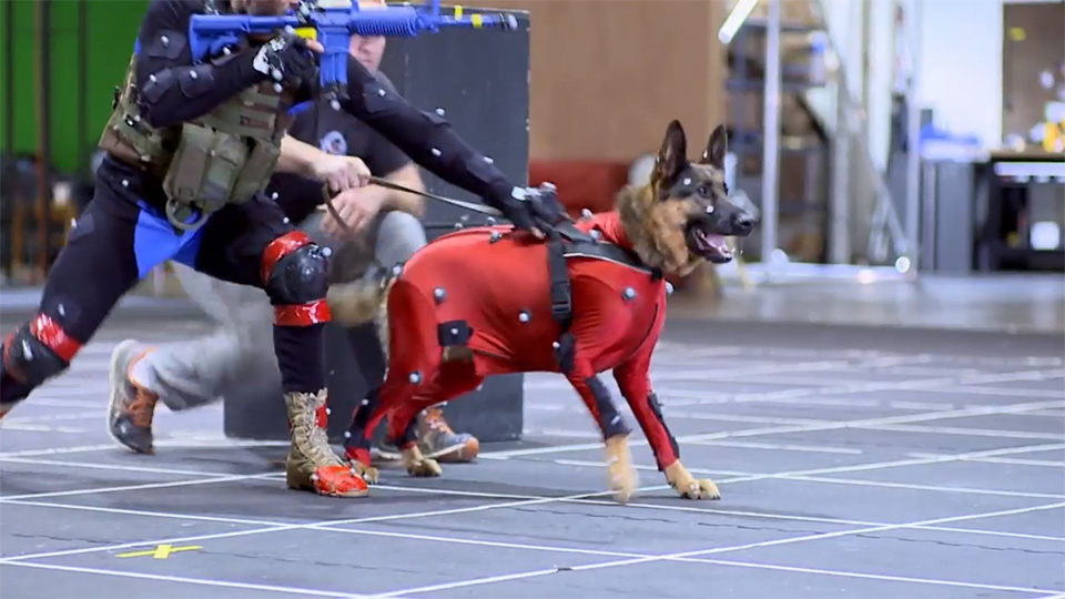 Call of Duty: Ghosts dev discusses challenges of motion capture work with dogs