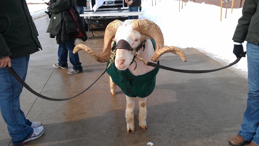 Beat The Sheep