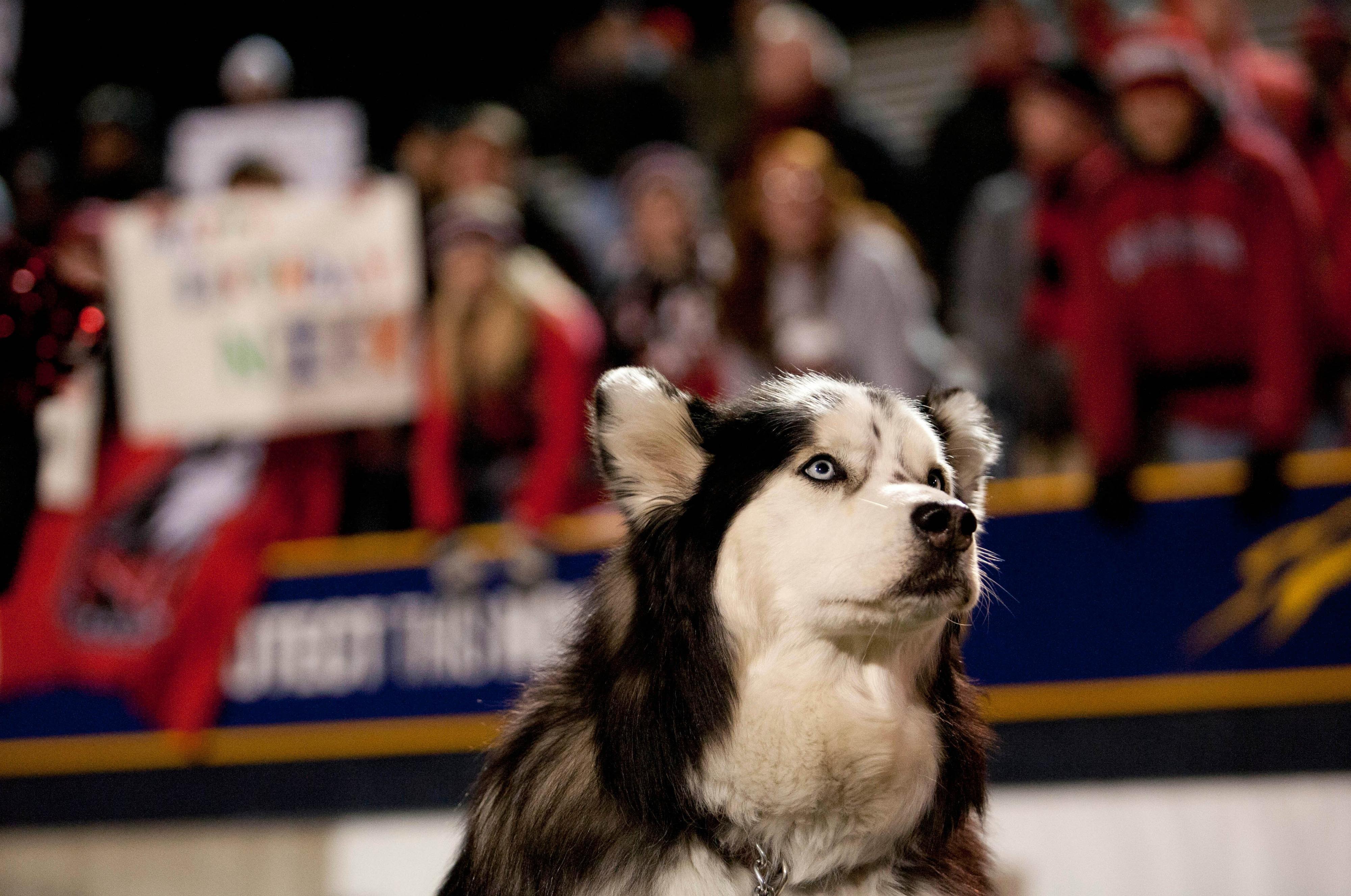 戴柴油到目前为止,戴塞尔仍然是顶级狗。