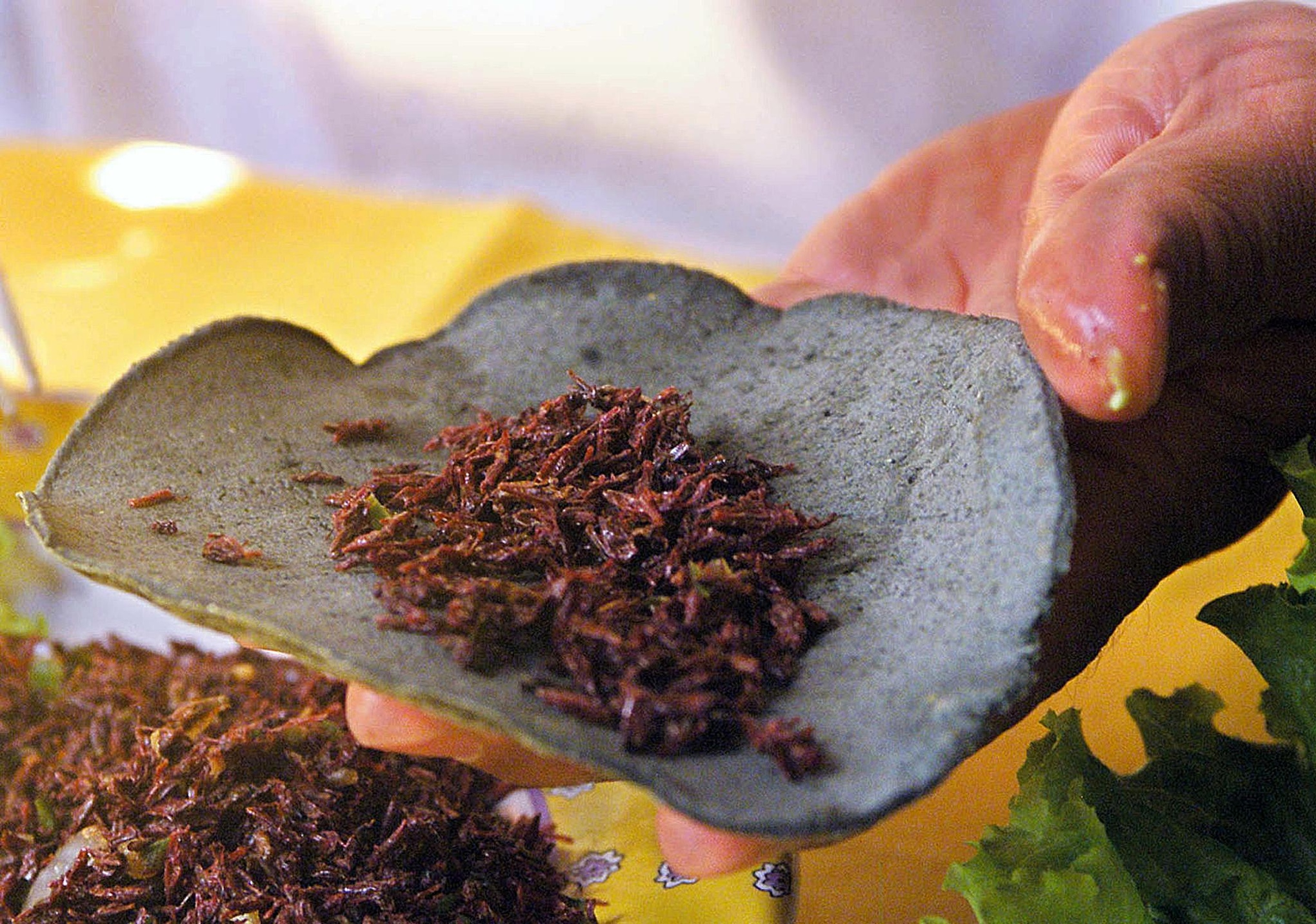 6 reasons you should consider eating insects