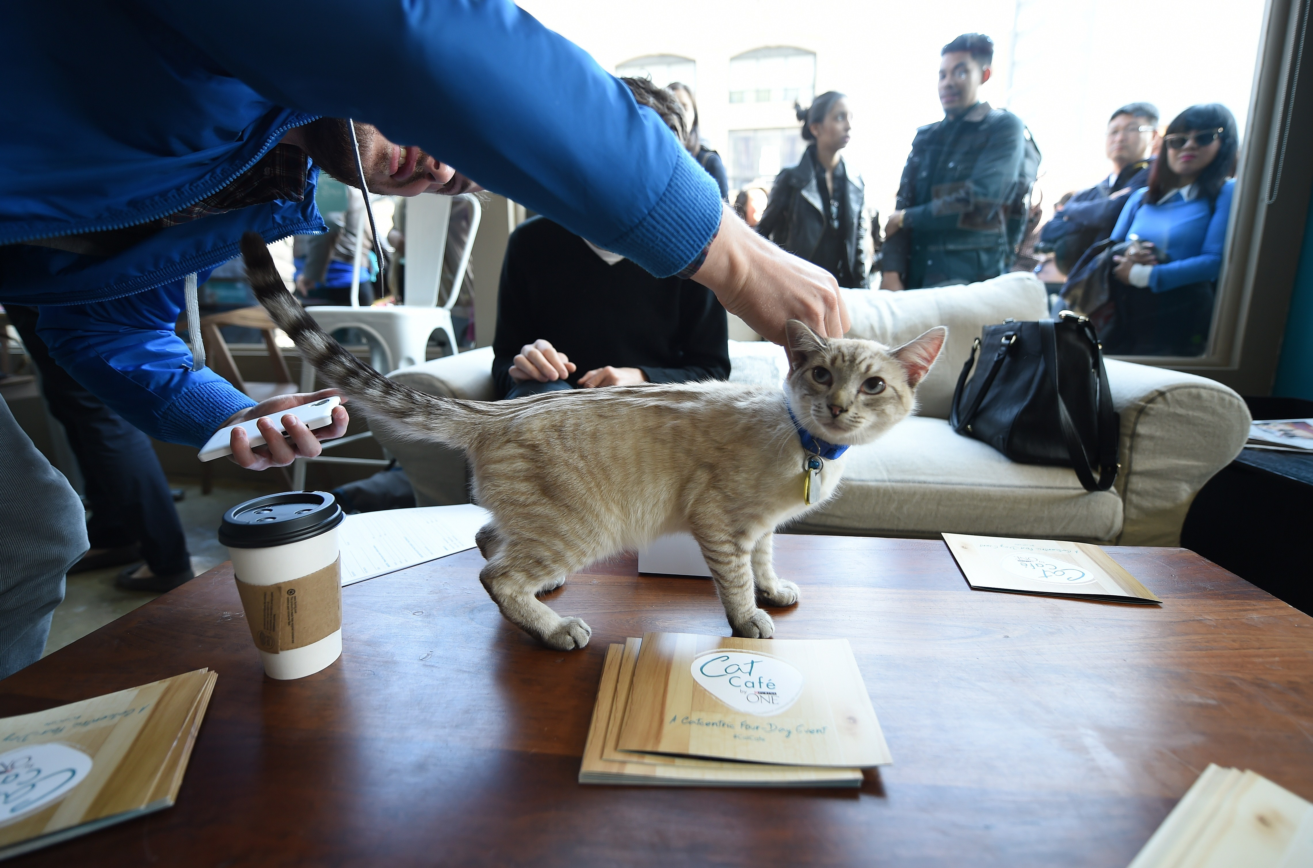 The First Cat Café in North America Opens in Montreal