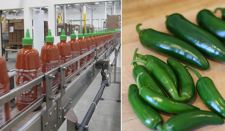 Sriracha Factory Saga Blamed on Faulty Science