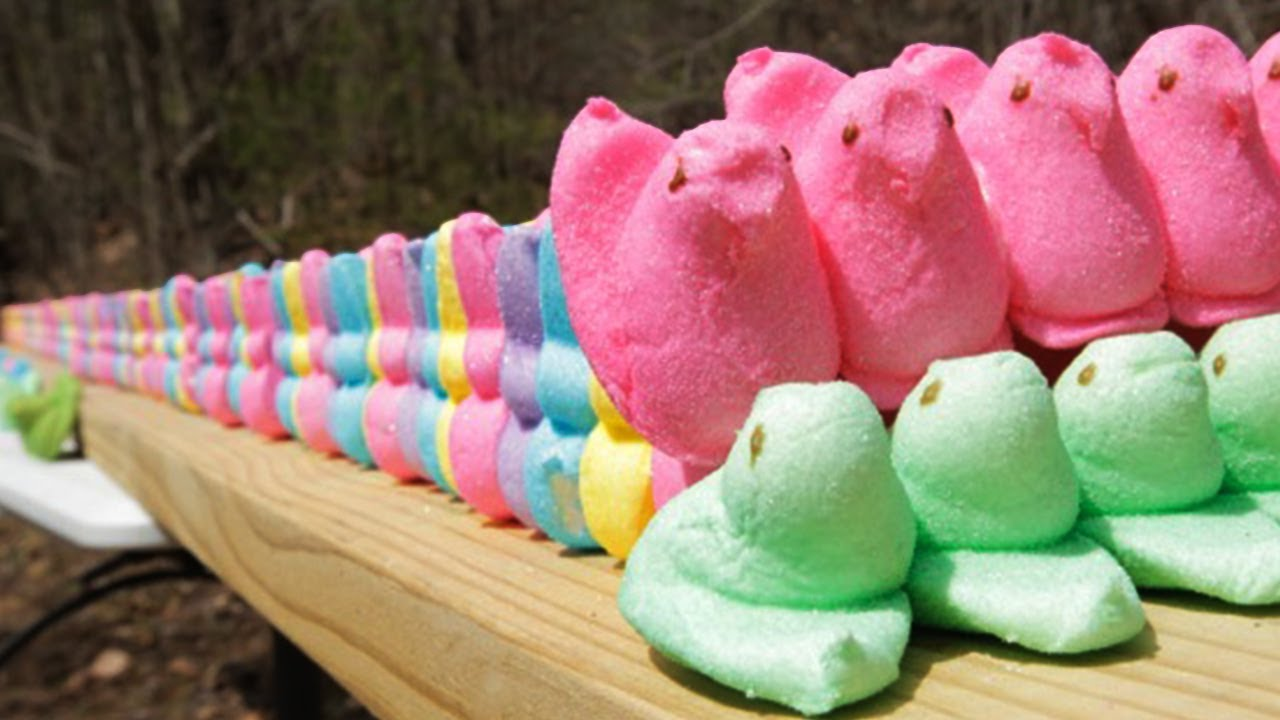 Watch Easter Peeps Stand in for Shooting Range Targets