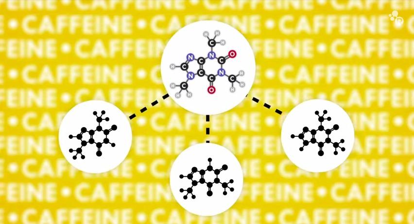 Watch Science Explain How Caffeine Stimulates the Brain