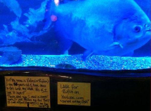 Fish Tensions