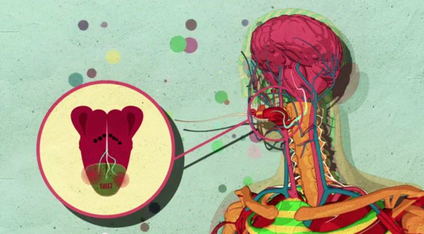 Watch an Animation Showing How Sugar Affects the Brain
