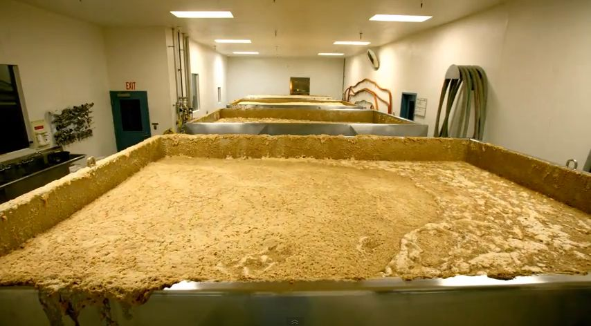 Watch a Time-Lapse of Beer Fermenting at Sierra Nevada