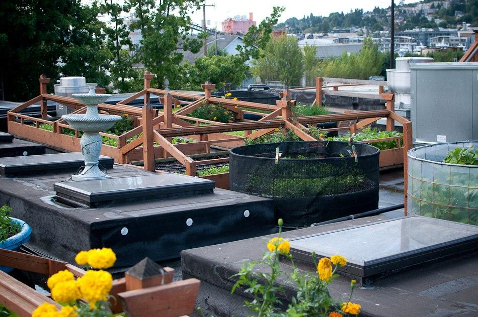 Bastille's rooftop garden