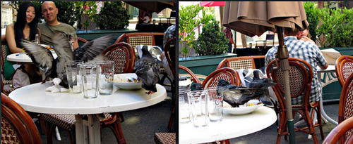 Pigeons who lunch on Maiden Lane.