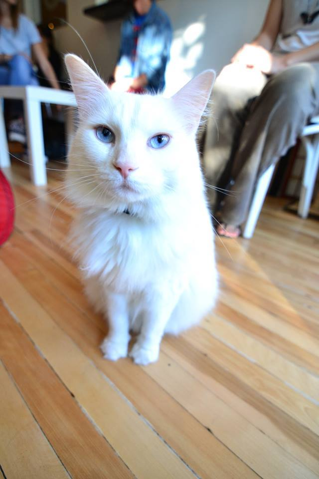 Cats in coffeeshops get the Yelp treatment
