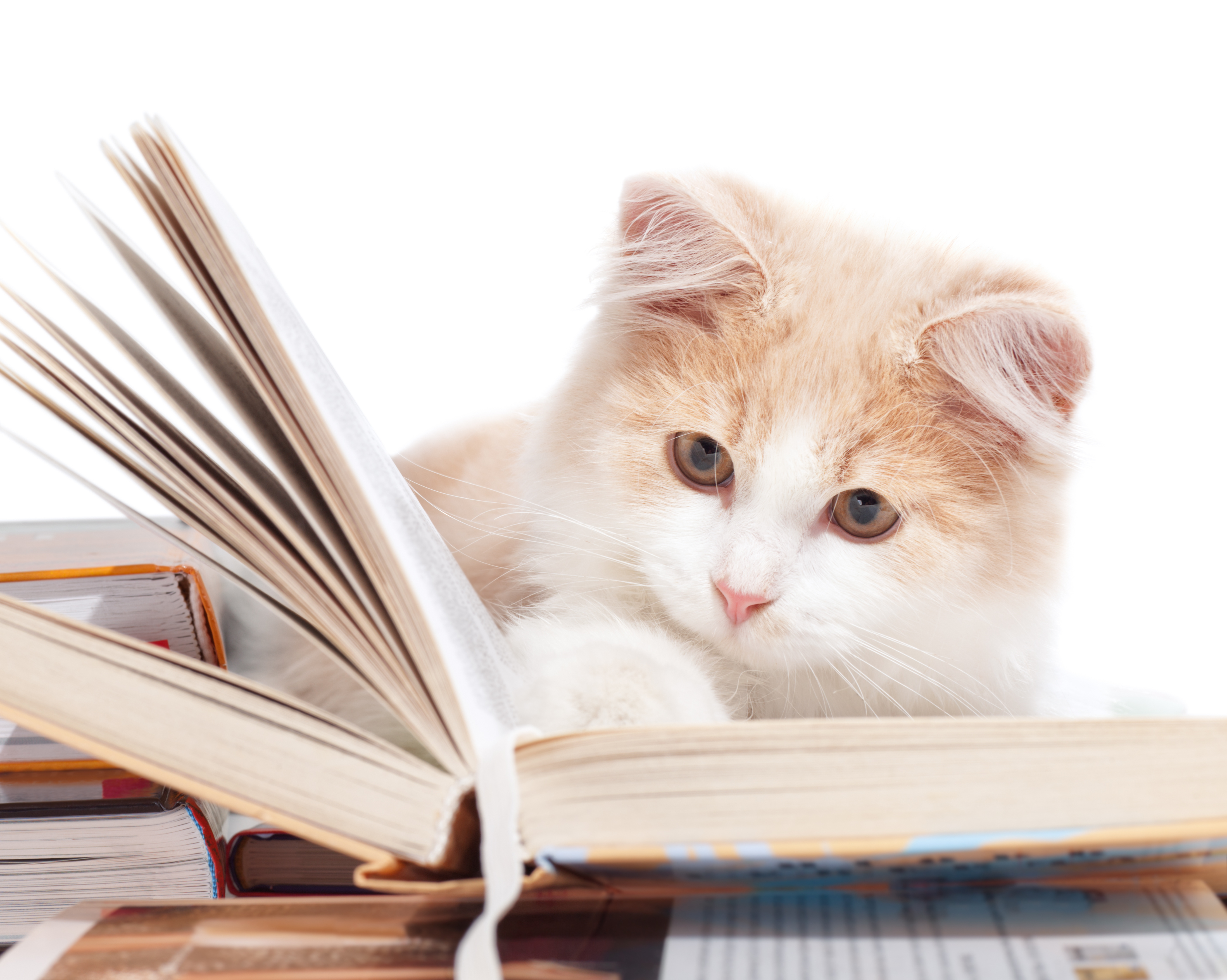 Read a version of The Jungle Book written in meows, thanks