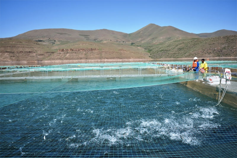 Highlands Trout farm in Lesotho.