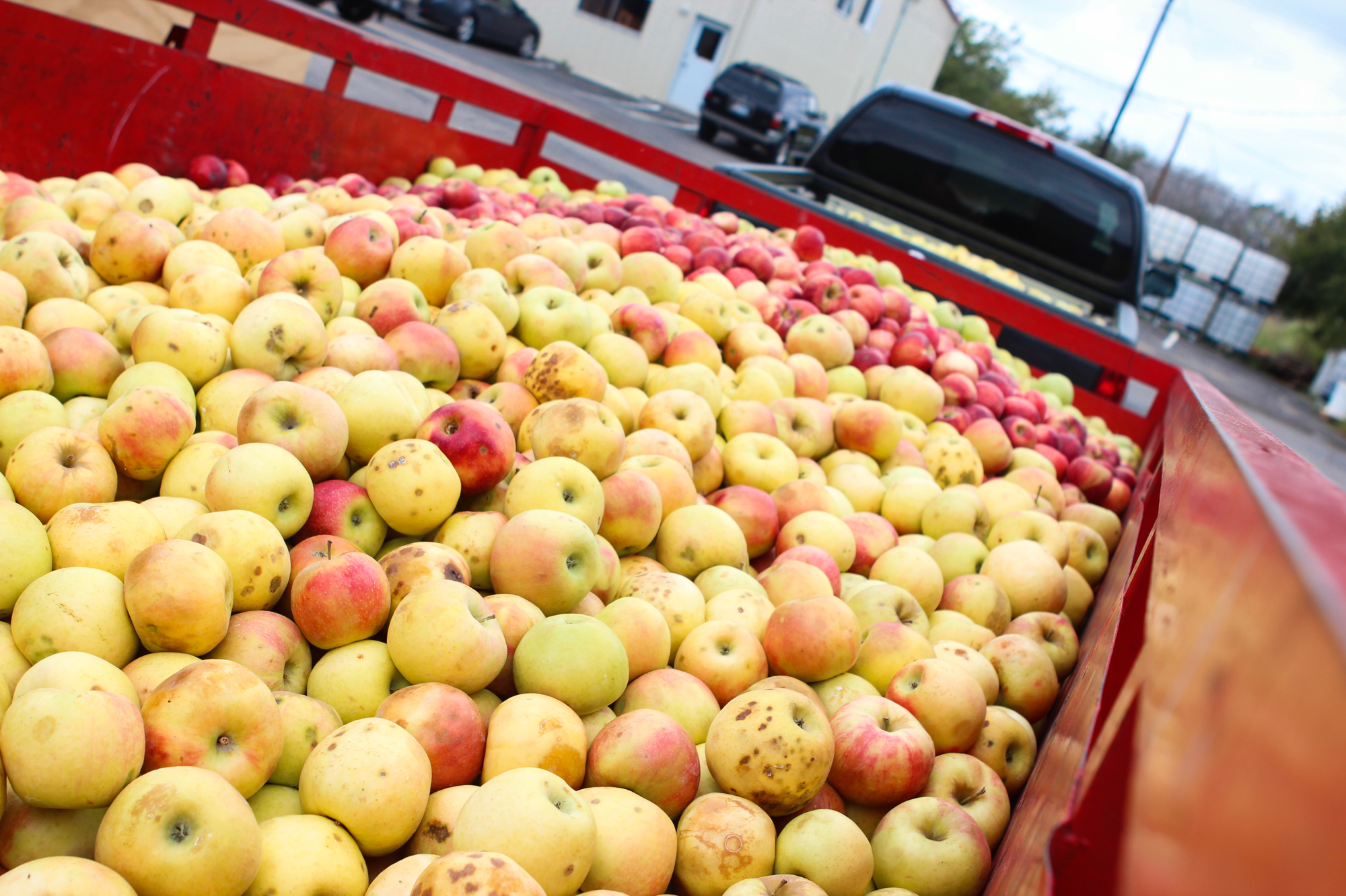 Apples at Argus Cidery