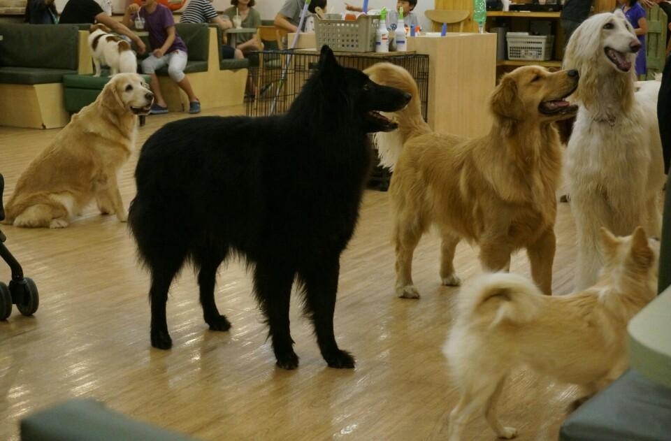 A dog cafe in Korea.