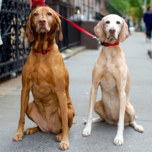 Dog Photographer 'The Dogist' Doesn't Own A Dog