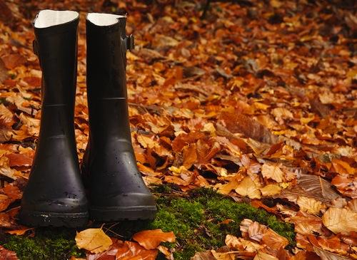 """Photo via Shutterstock/<a href=""""http://www.shutterstock.com/gallery-508876p1.html"""">Matt Gibson</a>"""