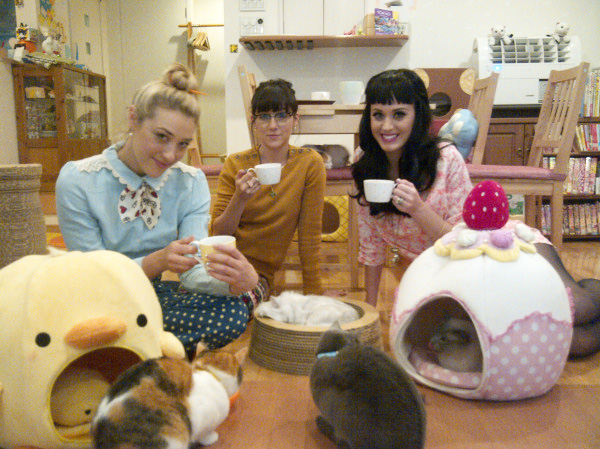 OMG: LA May Finally Get Its Own Cat Cafe