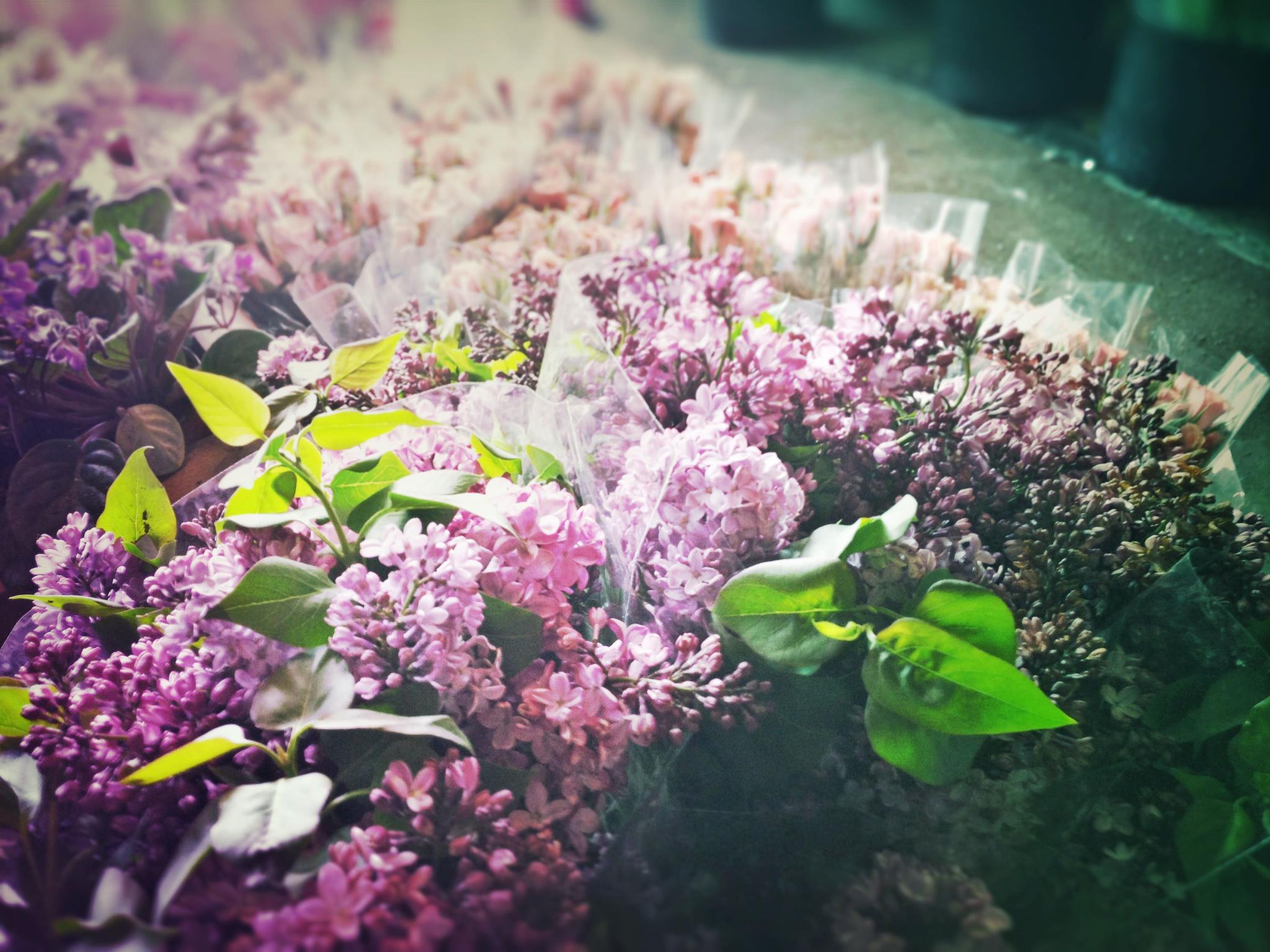 """Lilacs at B<a href=""""https://www.facebook.com/photo.php?fbid=10151437344634902&amp;set=a.10150560046124902.382093.317142004901&amp;type=1&amp;theater"""">rattle Square Florist</a>/Facebook"""