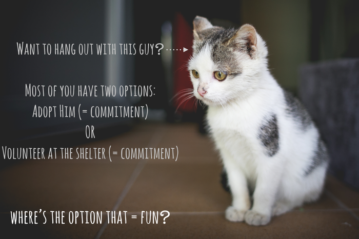An ad for Crumbs & Whiskers