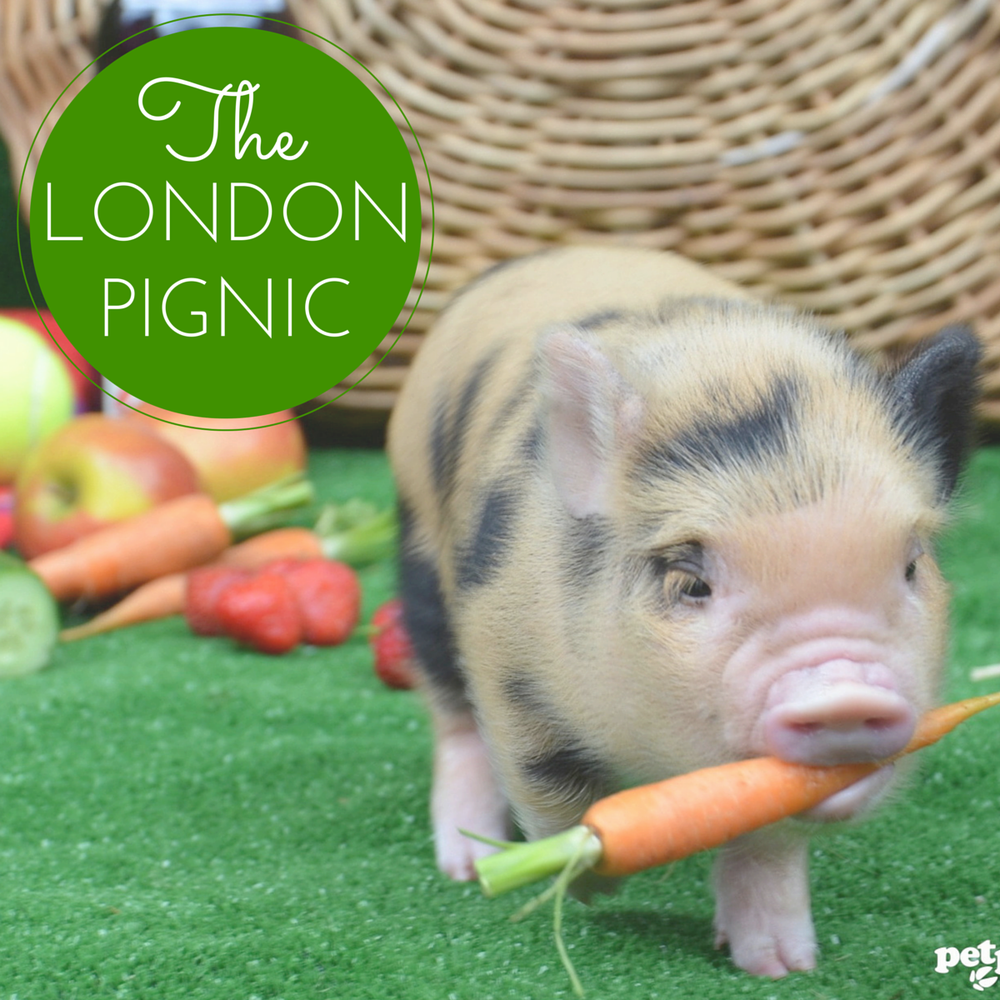 Yelp Hosts Pignic Cafe Pop-Up in London