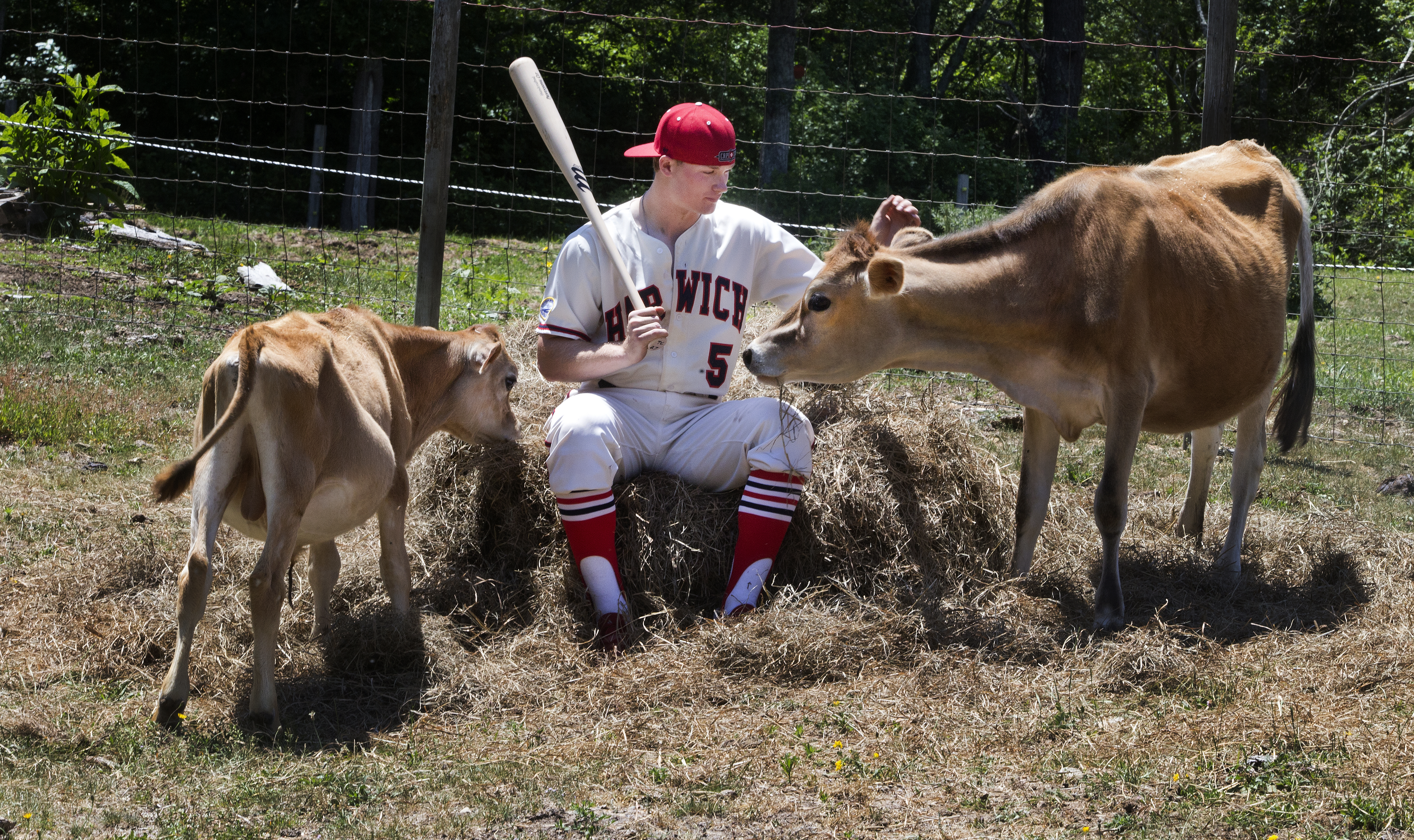 Ian Happ, from the University of Cincinnati, hangs out with the cows on the Crafts Farm in Harwich Port before heading to a Cape Cod League game