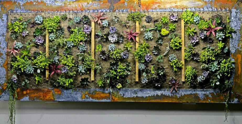 """The """"living wall"""" at Chartreuse Kitchen & Cocktails."""