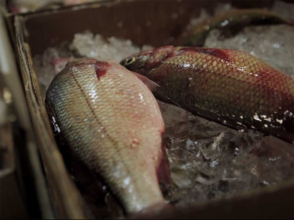 Watch the First Episode of New Investigative Documentary Show 'Food Crimes'