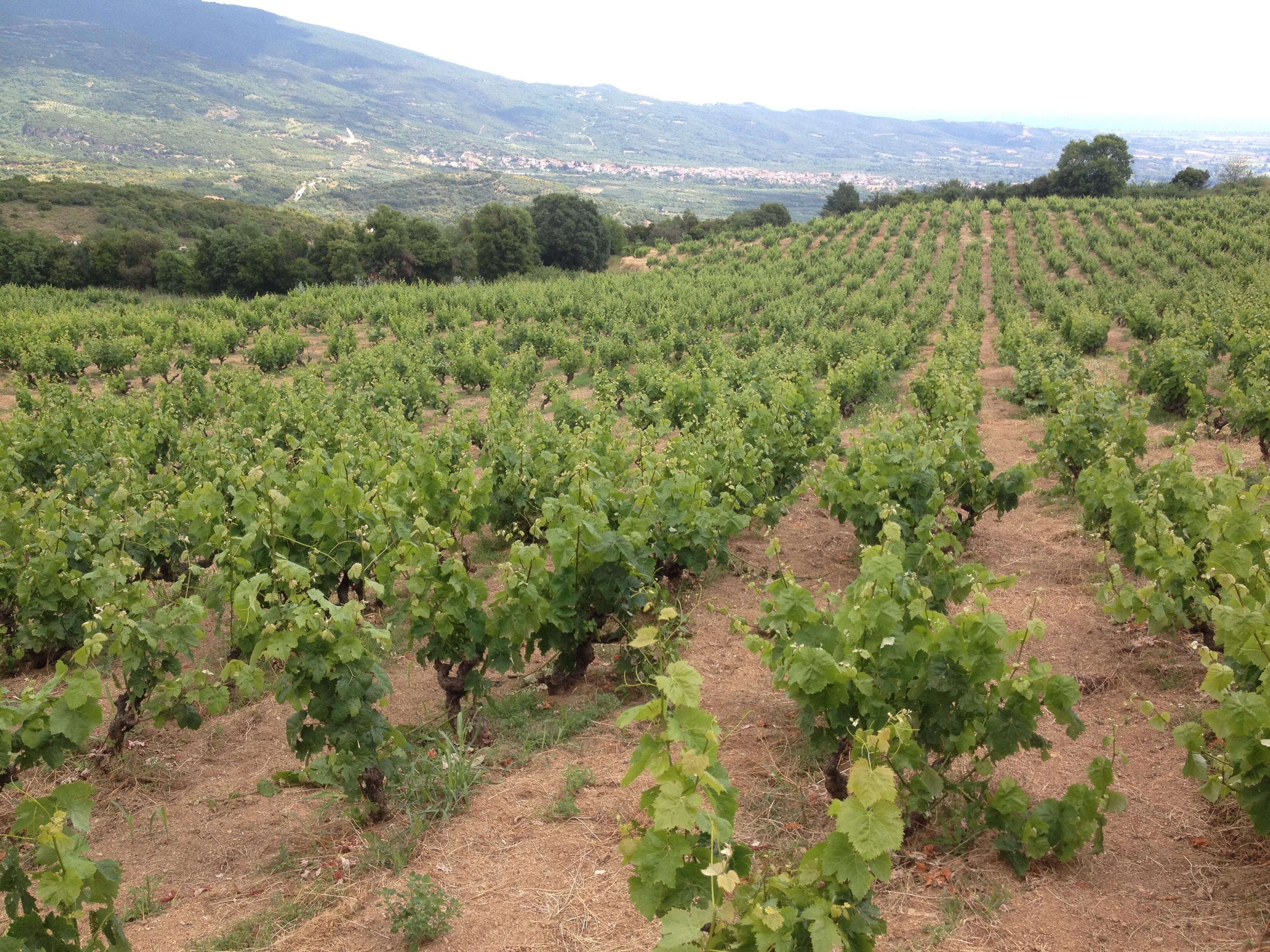 How Greece's Debt Crisis Is Impacting Its Wine Industry