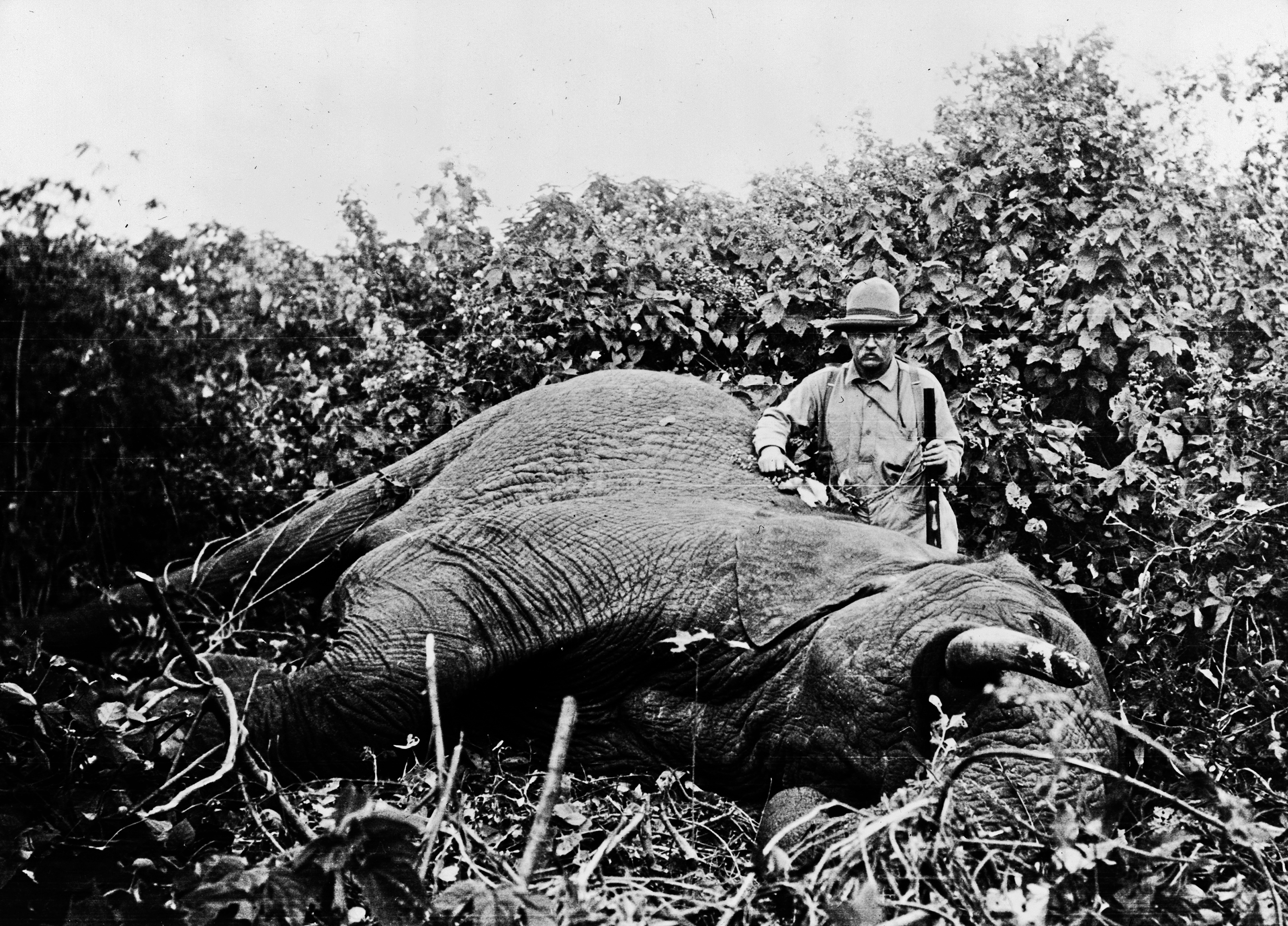 All 512 animals Teddy Roosevelt and his son killed on safari