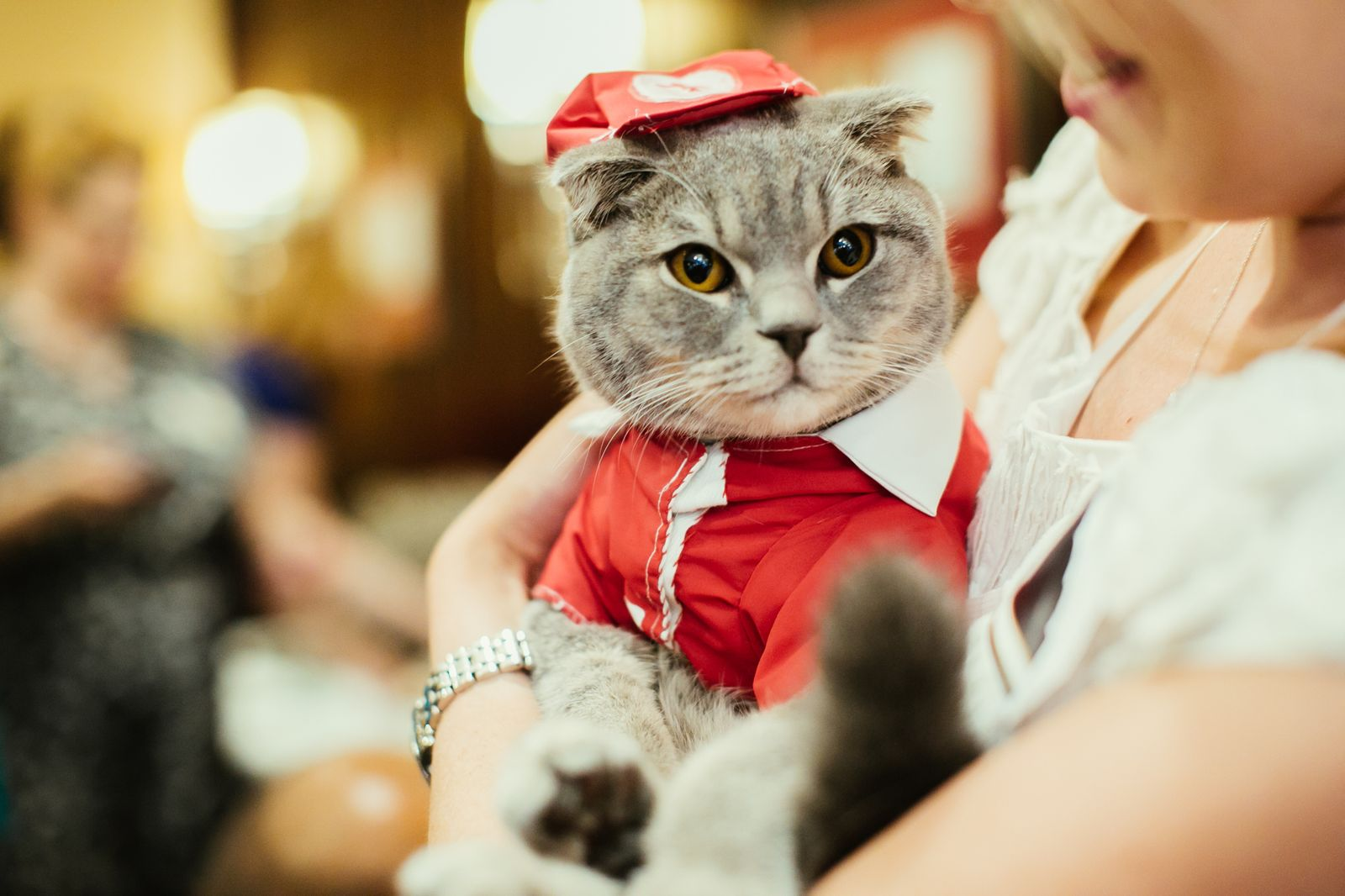 A Cat Café Is Opening in Brooklyn This Weekend