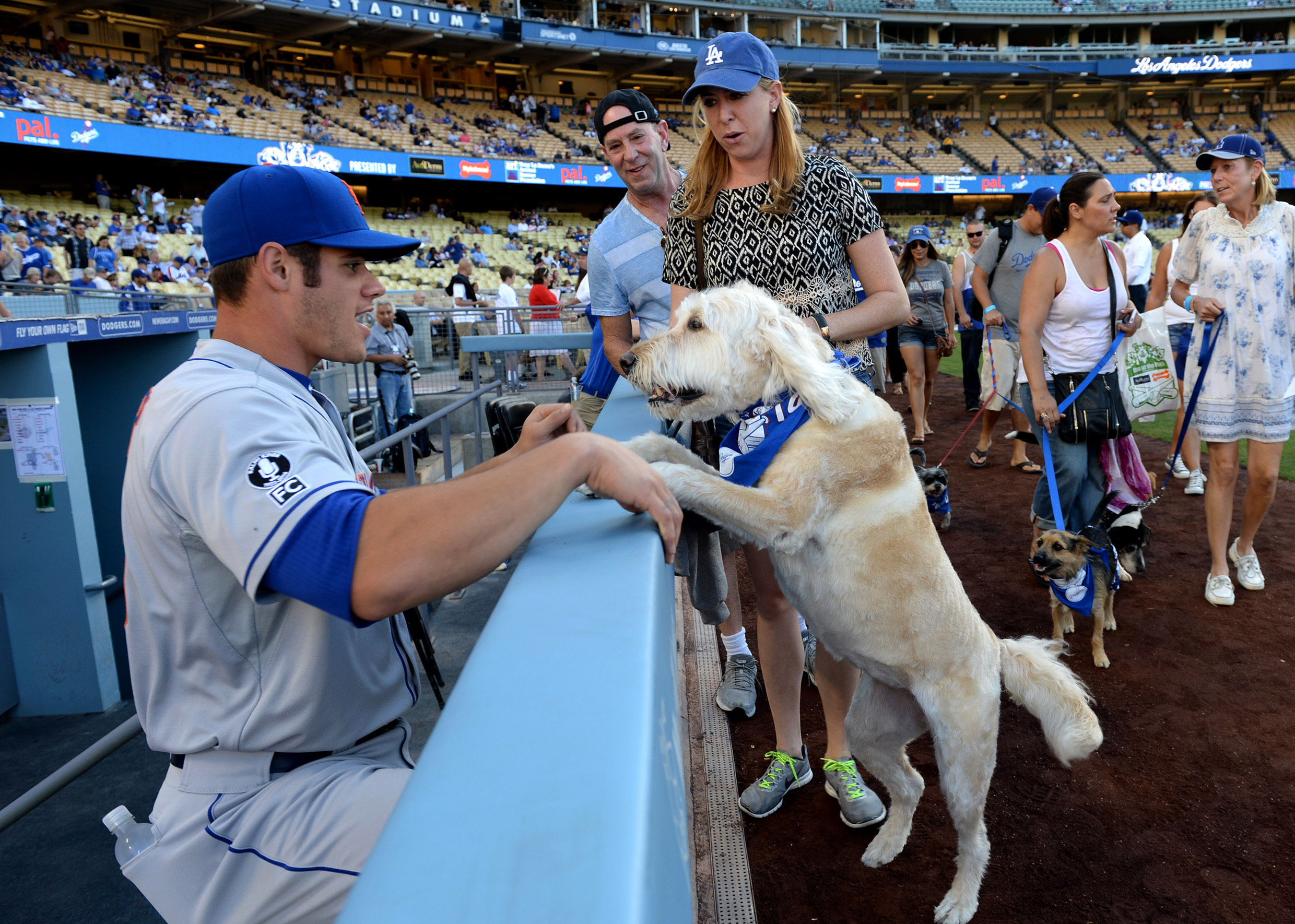 If the Dodgers play the Mets in the NLDS, who is the underdog?