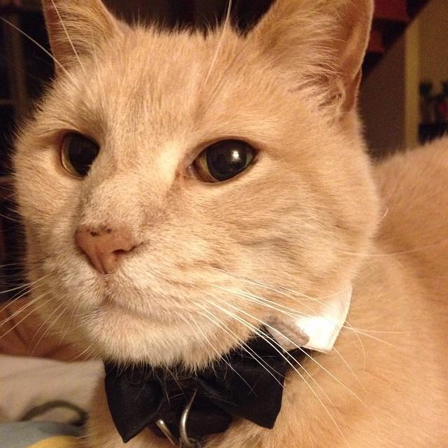 Ready for the Cat Cafe job fair