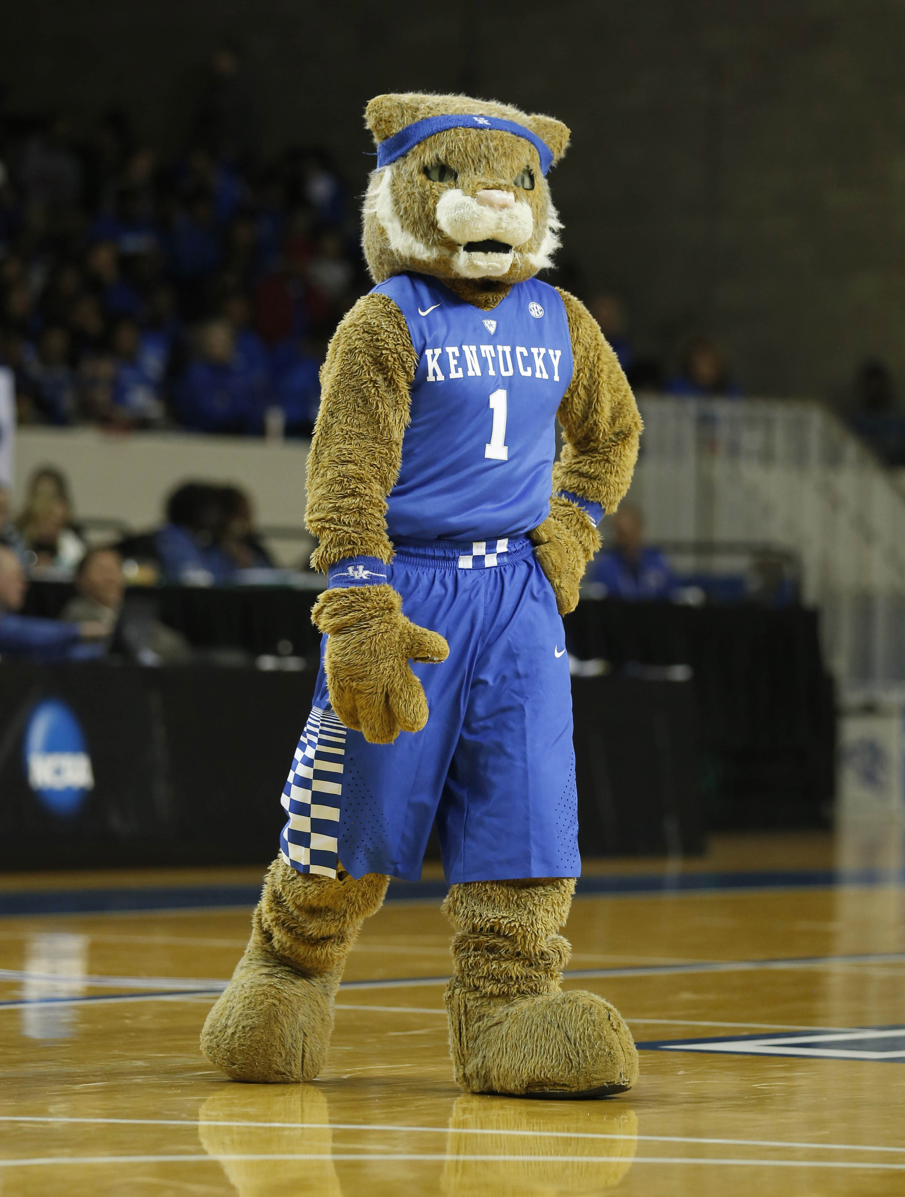 The Wildcat may be tired from all those pushups last night, but will still be at Memorial to cheer on the Cats!