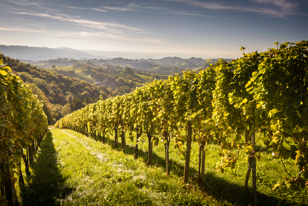 Ask a Somm: Where in the World Are the Best Value Wines?