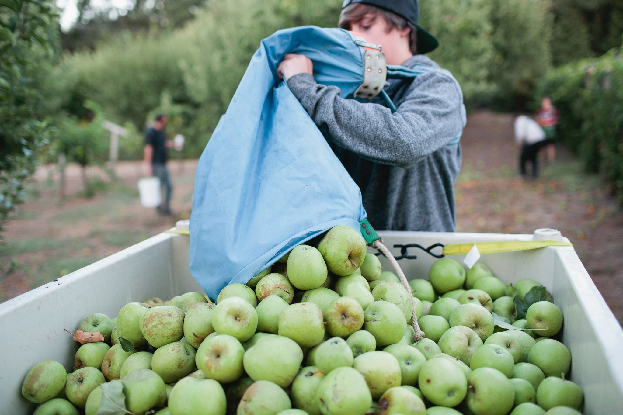 What the Country's New Cider Act Means for You