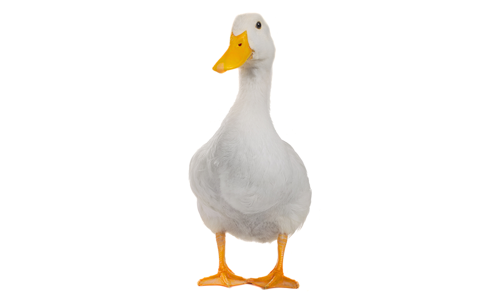 """Why the """"duck curve"""" created by solar power is a problem for utilities"""