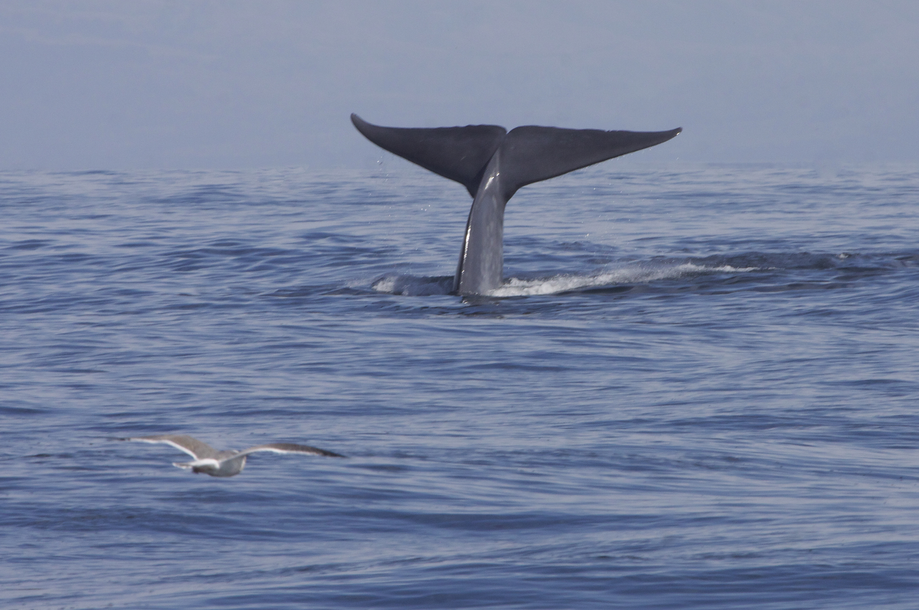 The Verge Review of Animals: the blue whale - The Verge