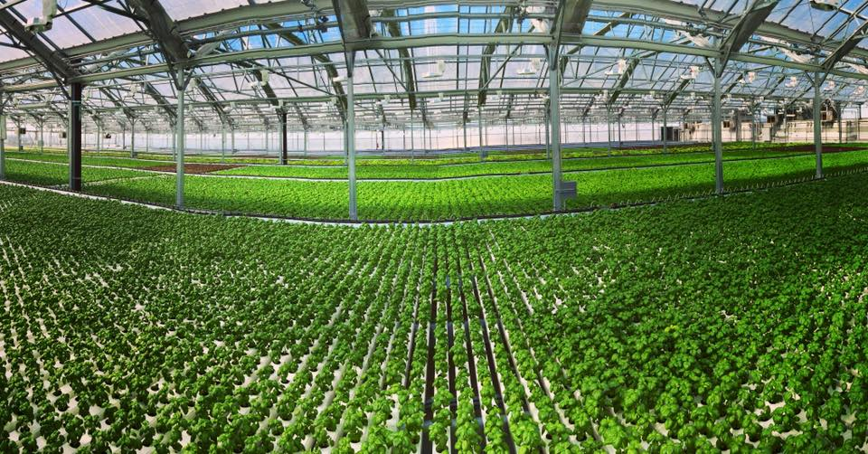 How Urban Farms Are Changing the Way We Eat