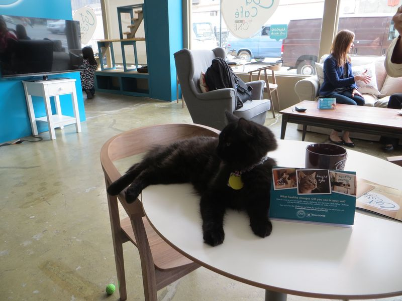 A Cat Cafe Could Open in Boston (for Real This Time)