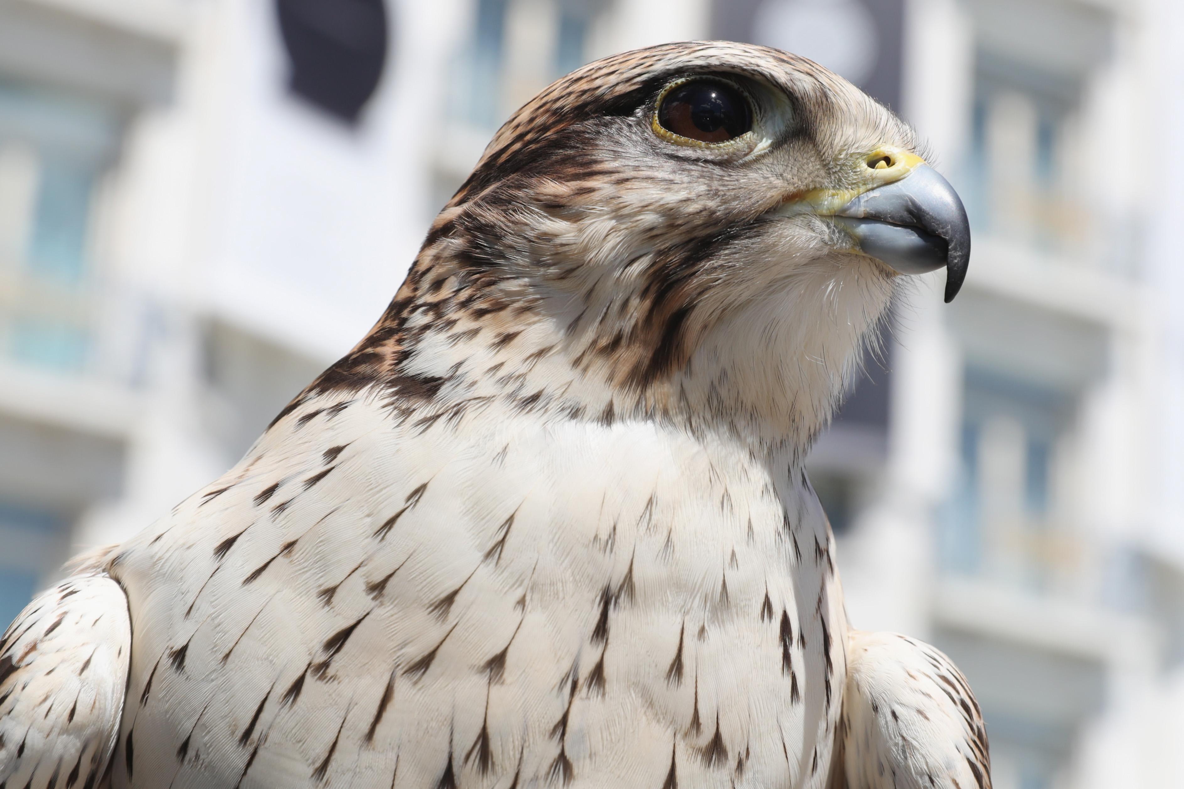 What a majestic falcon.