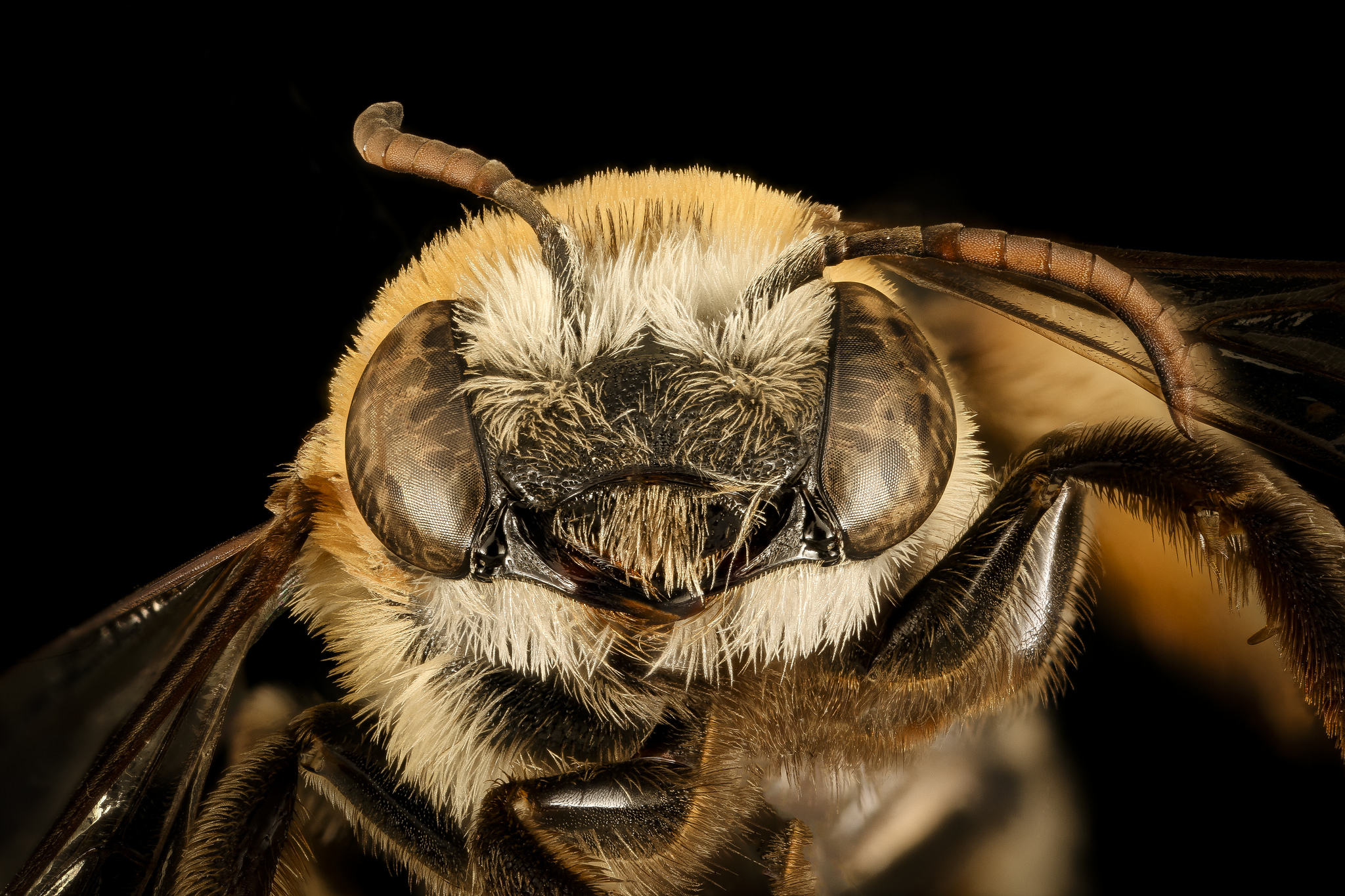 """20 photos of bees that will make you say, """"Damn, bees are beautiful"""""""