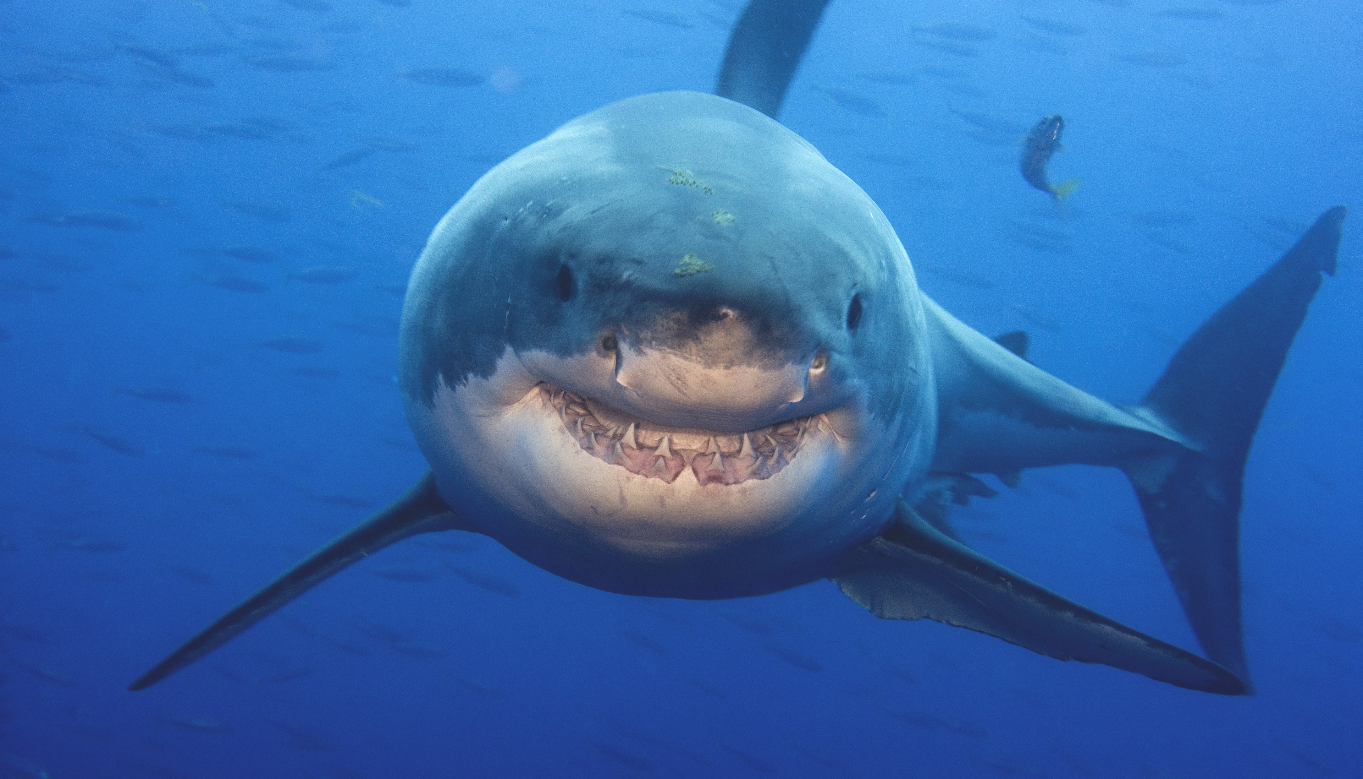 Shark Week 2016: what to watch (and what to avoid), according to a shark scientist
