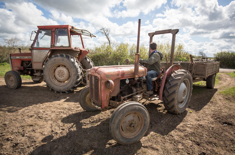 Asparagus Farming In Devon