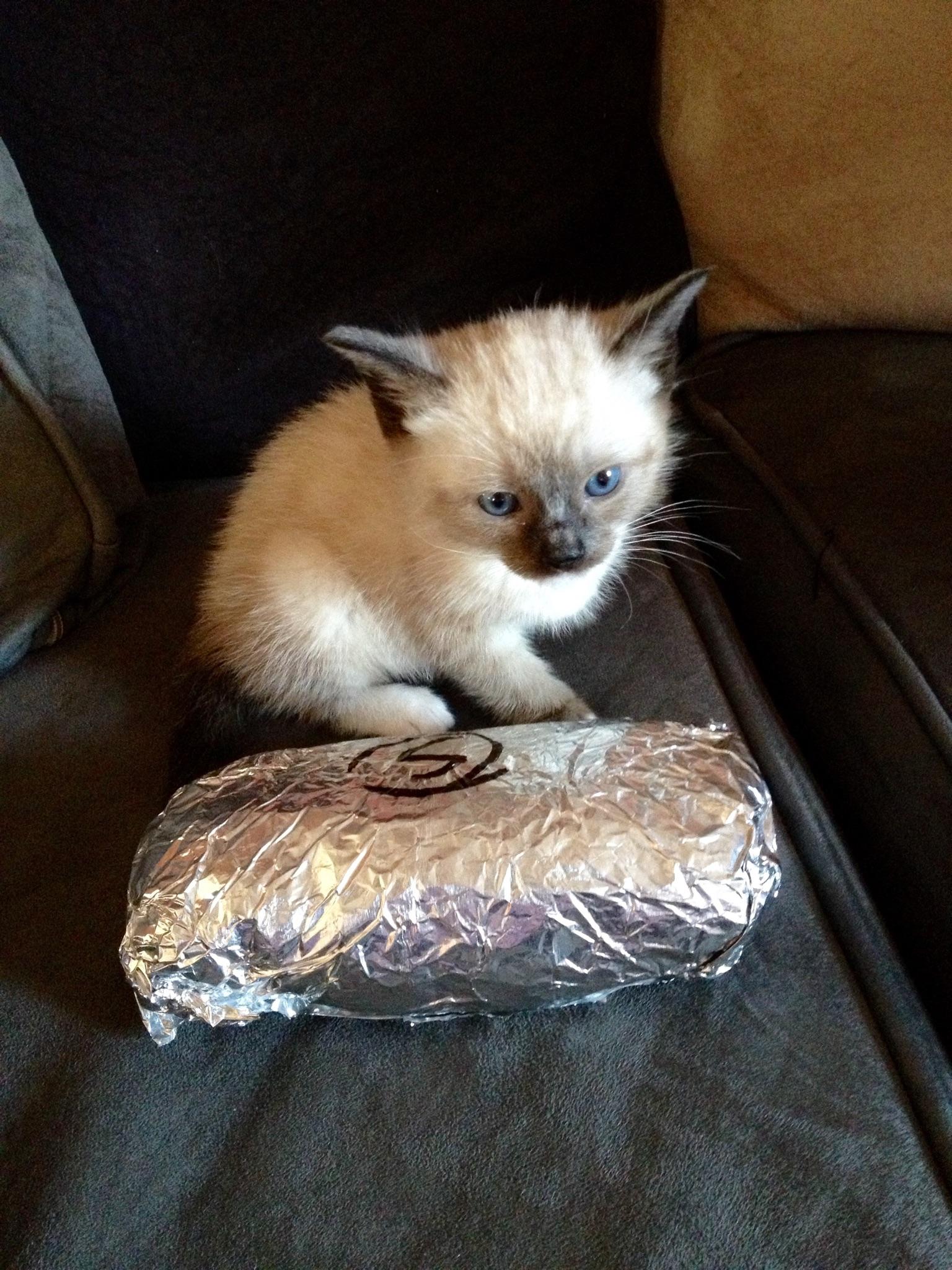 Burrito-Wielding Cops Rescue Adorable Kitten