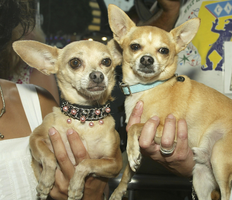 Gidget and Moondoggie