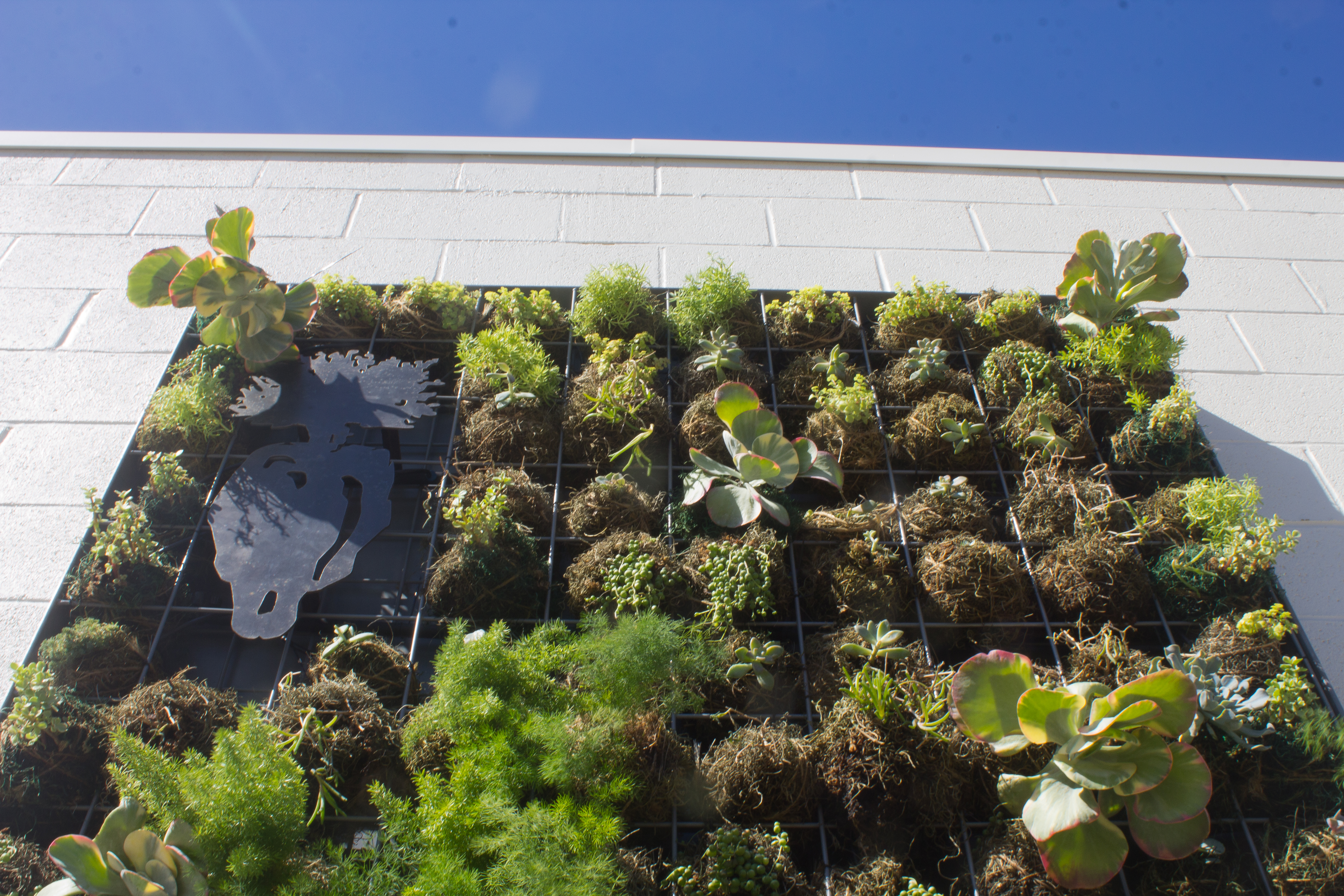 Baby Greens' living plant mural