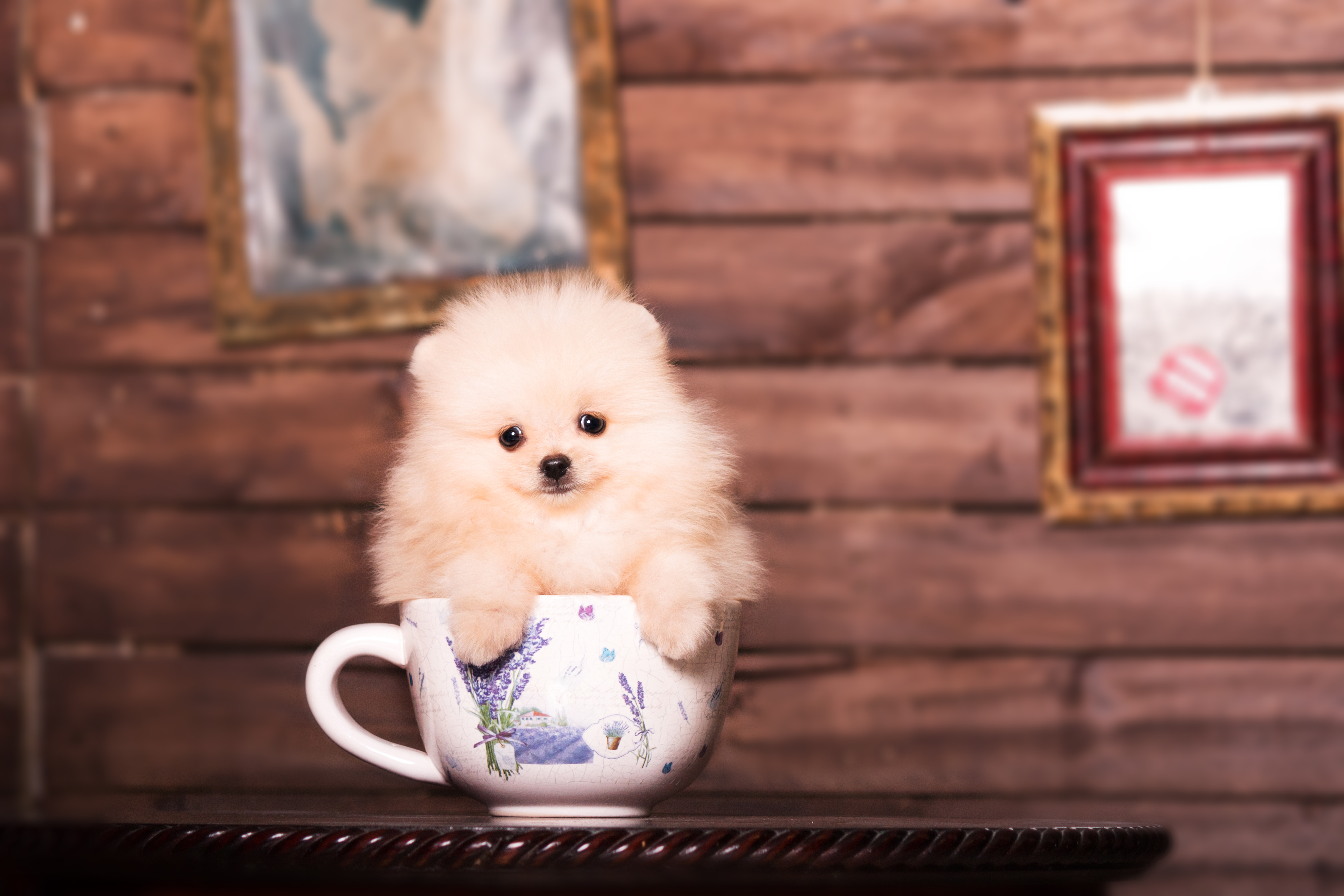SF Might Get Its Very Own Puppy Café